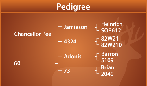 Commander Peel Pedigree