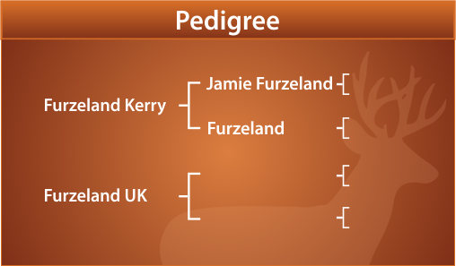 Major Peel Pedigree