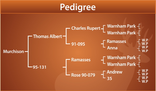 Murchison Pedigree