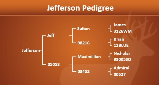 jefferson-pedigree-for-web